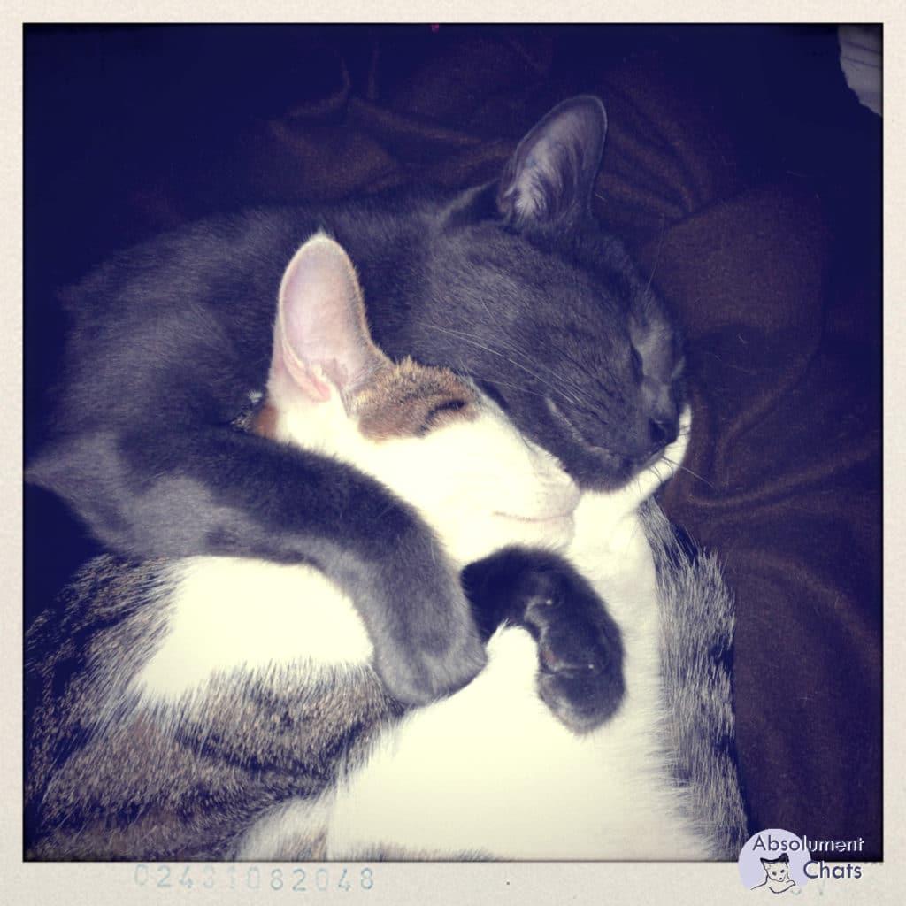 Mais à quoi rêvent les chats ? Absolument Chats