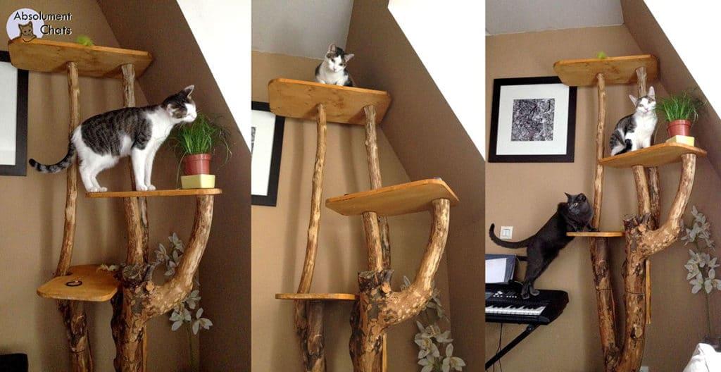 mon arbre à chat - Absolument Chats