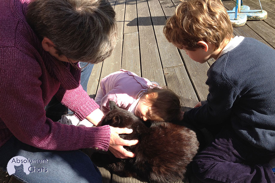 chat avec les enfants_ Absolument Chats
