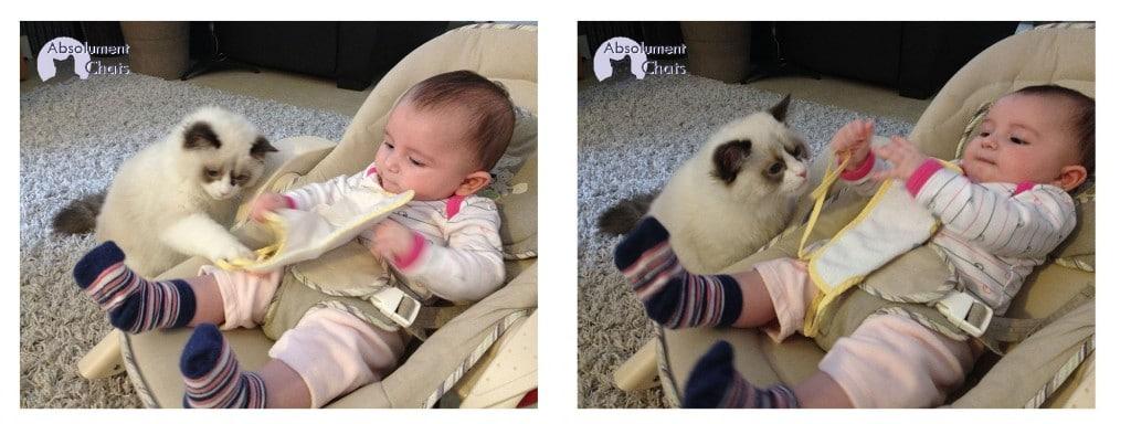 chat et bébé_ Absolument Chats
