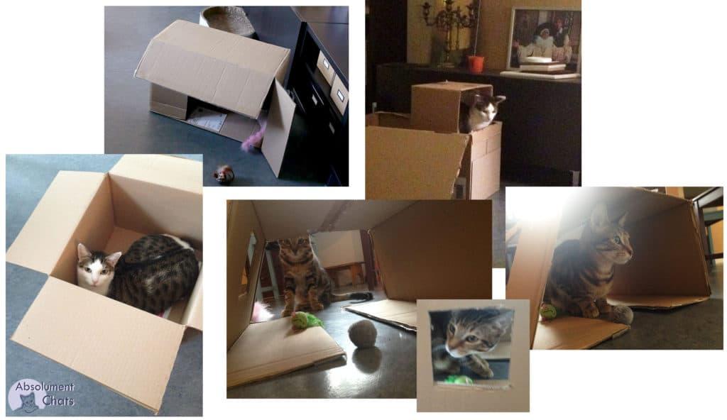 dans les cartons- idées simples et pas chères pour amuser les chats- Absolument Chats