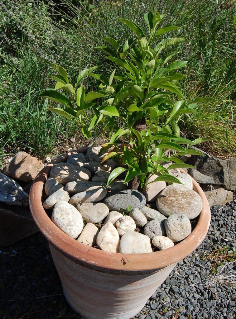 galets plats-proteger ses plantes et semis des chats- Absolument Chats