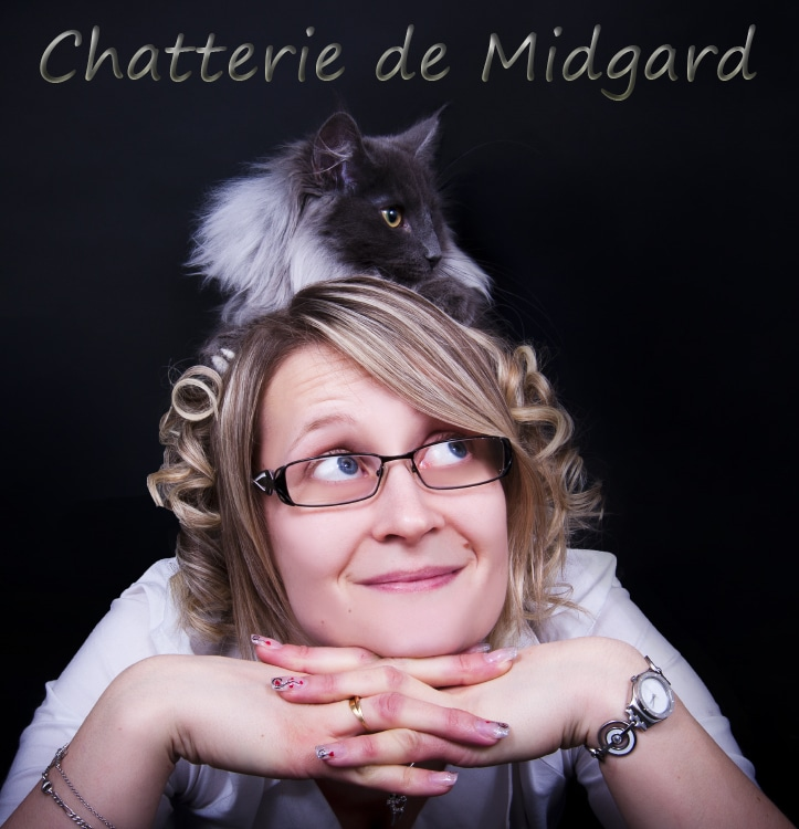 chatterie Midgard - norvégien bombay burmese