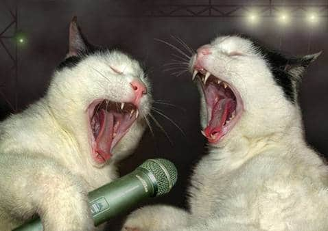 "ColKorn1982- ""singing Cats"""