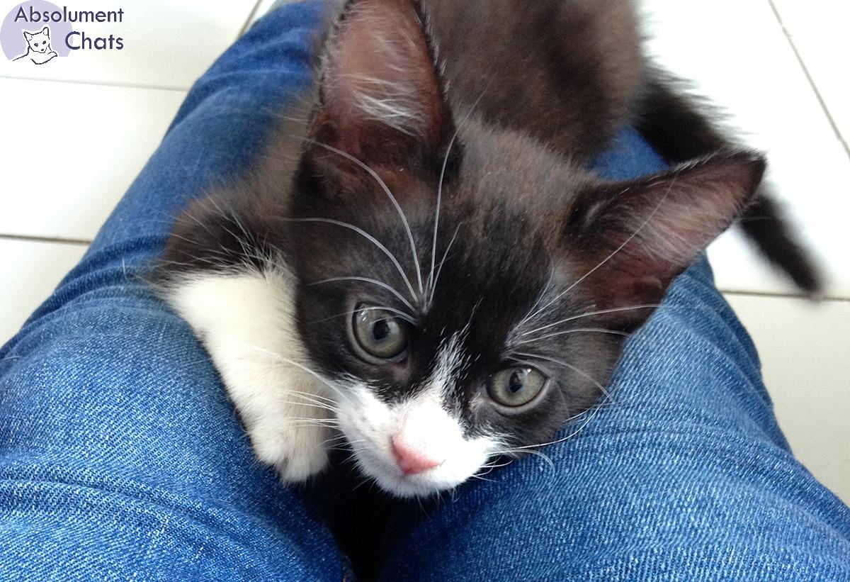 Une éducation de base, qui fait de tout chaton une crème - Absolument Chats