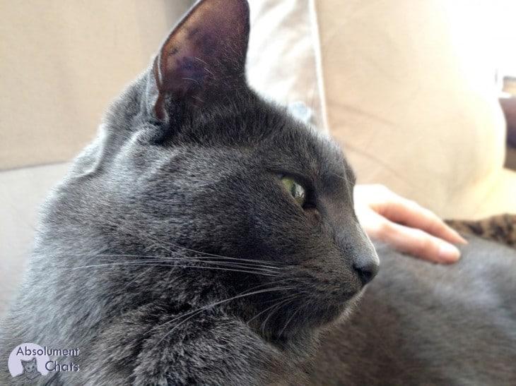 Comment porter et manipuler un chat ? absolument chats