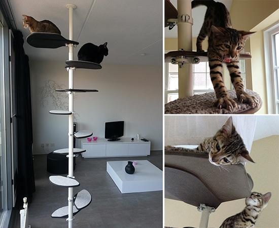 Des arbres à chats pas comme les autres - Absolument Chats