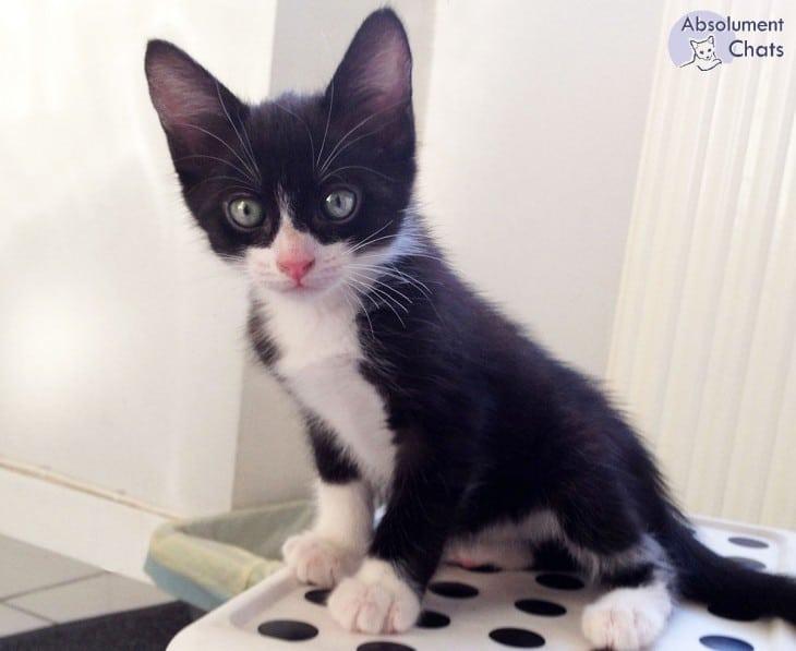 Les premiers soins vétérinaires - Absolument Chats