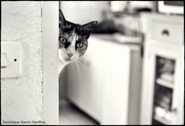 comment faire perdre une mauvaise habitude à son chat ?