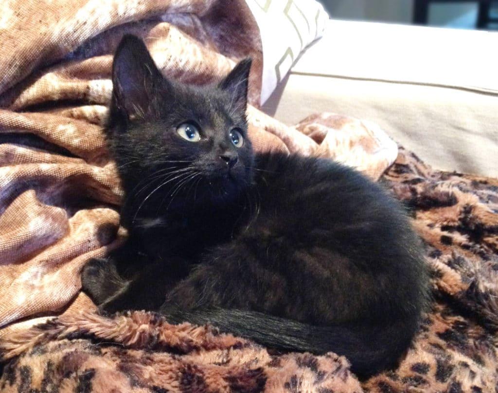 chaton - Absolument Chats