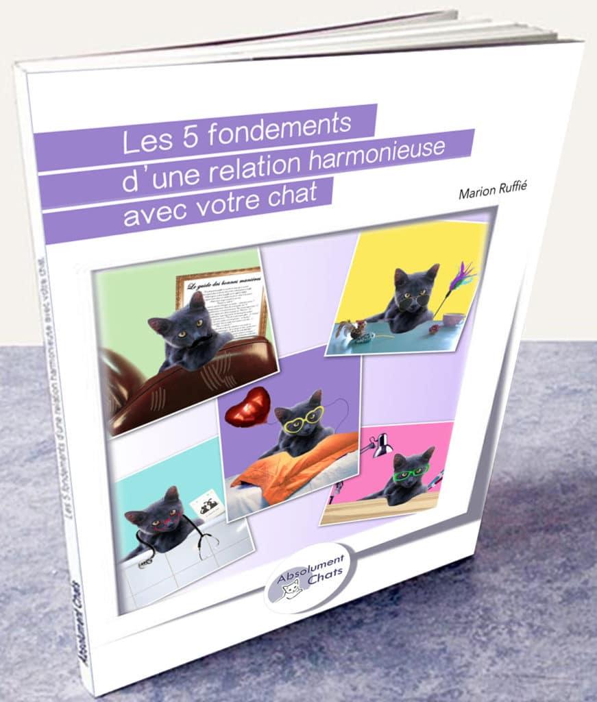 Les 5 fondements d'une relation harmonieuse avec votre chat