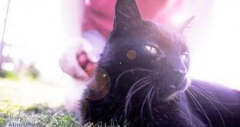 quel est l'age humain de mon chat - Absolument Chats