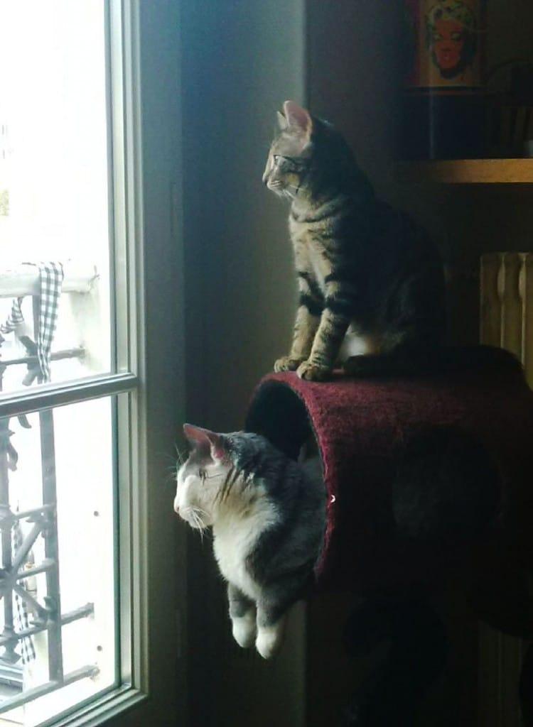 doug et grison - Absolument Chats