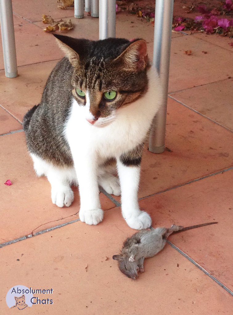 bien nourrir son chat - Absolument Chats