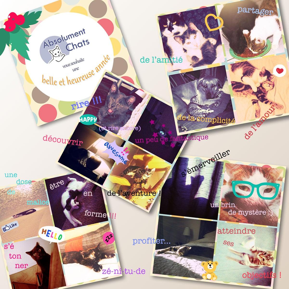 carte de voeux absolument chats