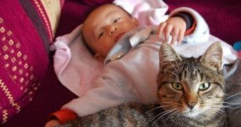 chat et bébé- chat et enfant- Absolument Chats