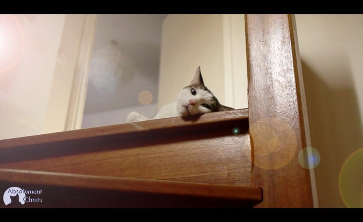 les chats et la canicule_ Absolument Chats