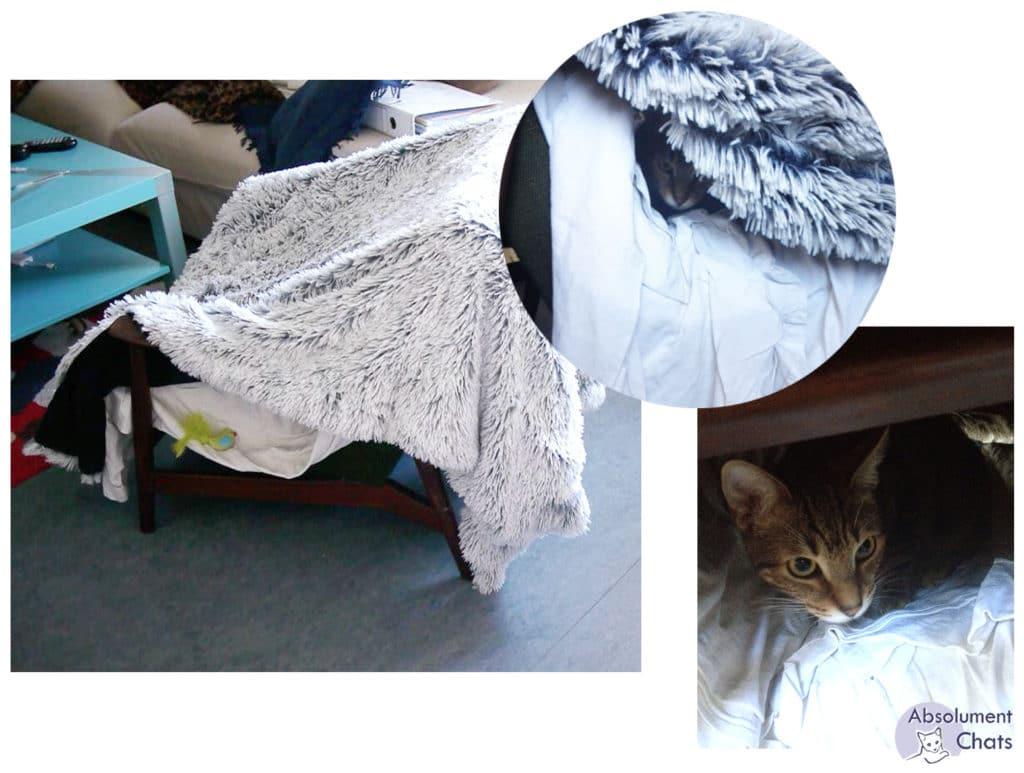 cachette- idées simples et pas chères pour amuser les chats- Absolument Chats