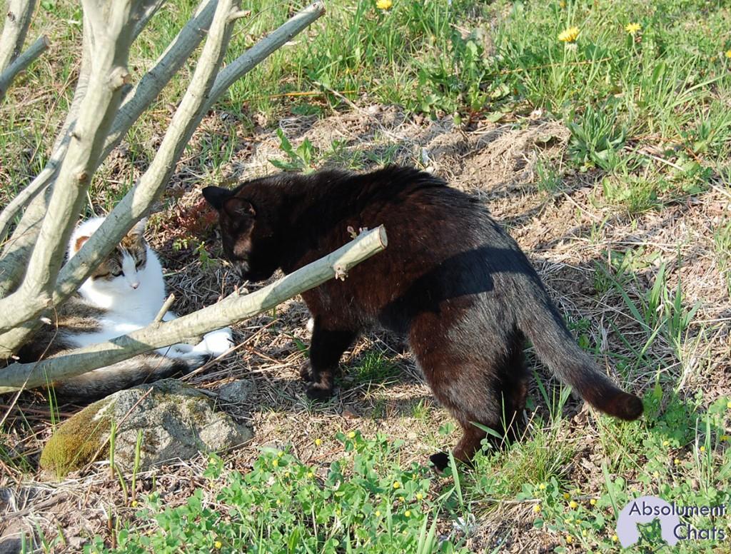 proteger ses plantations et semis des chats- Absolument Chats