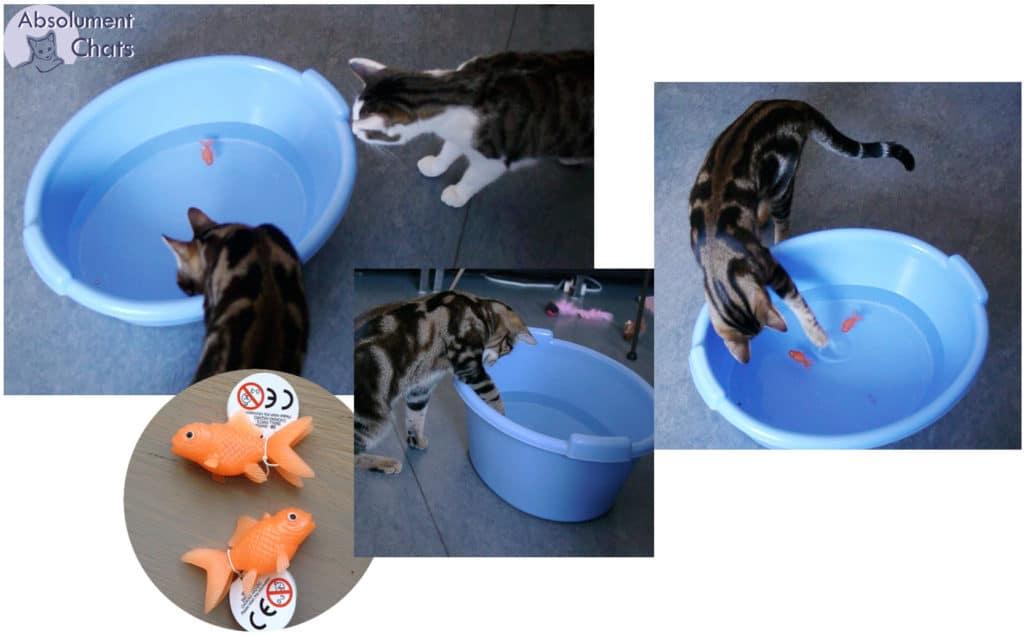 à la pêche- idées simples et pas chères pour amuser les chats- Absolument Chats