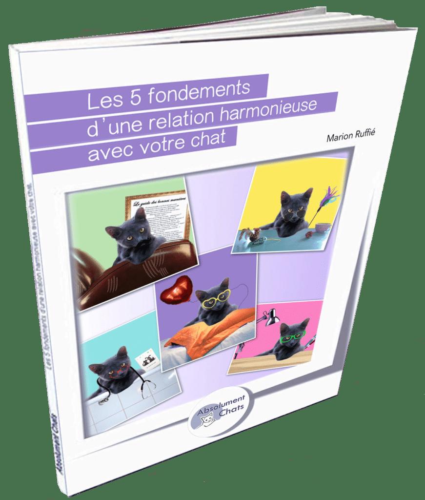 nouvelle couverture ebook format livre copie