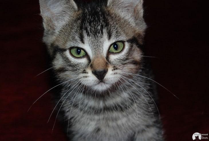pourquoi le chat a 9 vies- Absolument chats