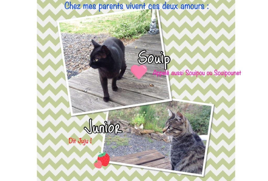 quel surnom a votre chat - Absolument Chats 4