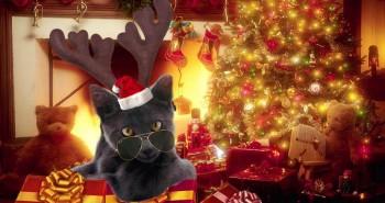 plein d'ideees cadeaux pour noel chat ch'est chouette - Absolument chats