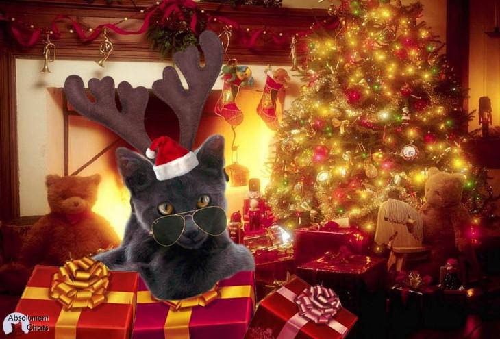 plein d'idées cadeaux pour noel chat ch'est chouette - Absolument chats