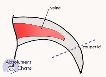 couper les griffes - Absolument Chats