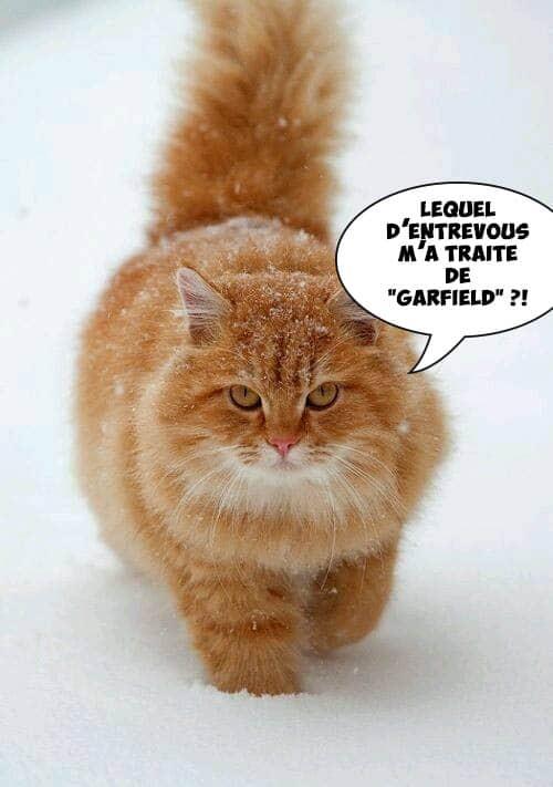 garfield is back
