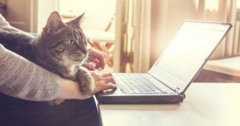 51888872 - woman and her contented tabby cat, who is lying across her lap and arm, working on a laptop computer at home typing in data, close up view