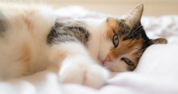 osteopathie-pour-chat_-banque-d-images-et-photos-gratuites-libres-de-droits-telechargement-gratuits232