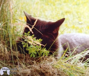 chat nature absolument chats