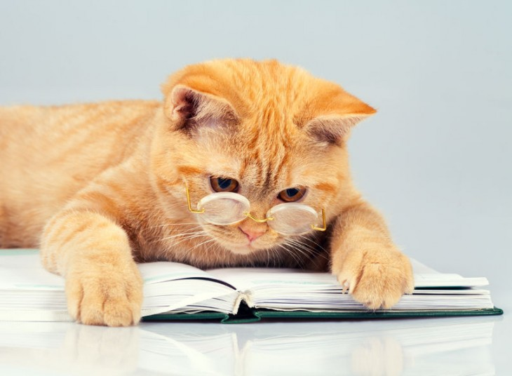 livres chat 35927559 - cute business cat wearing glasses reading notebook (book)
