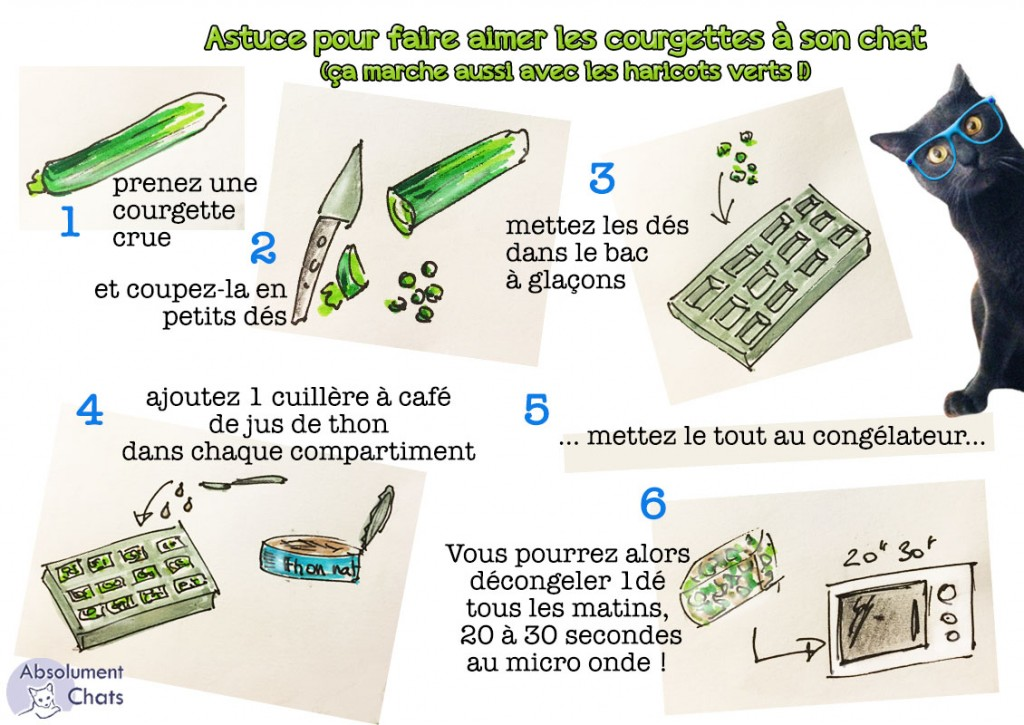 astuce-courgettes-pour-chat-absolument-chats