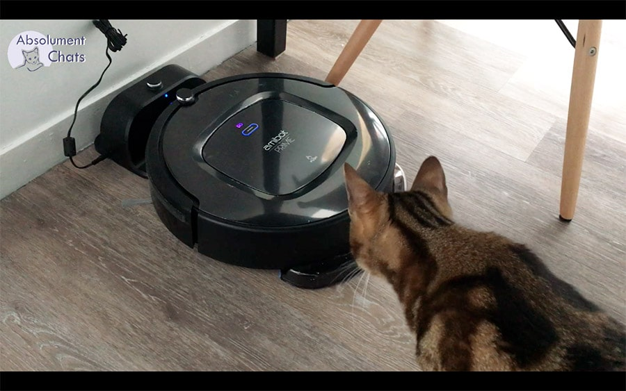 amibot prime h2o base chargement - absolument chats