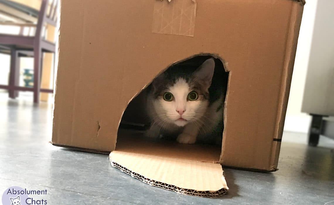 preparer son chat au demenagement_ absolument chats