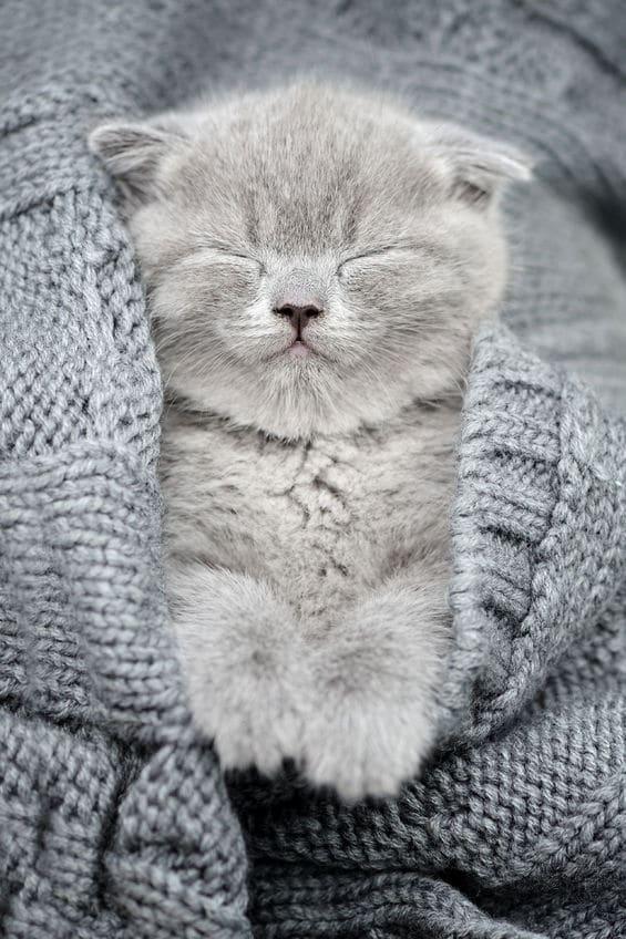 57827816 - cute gray funny kitten sleep in gray cloth