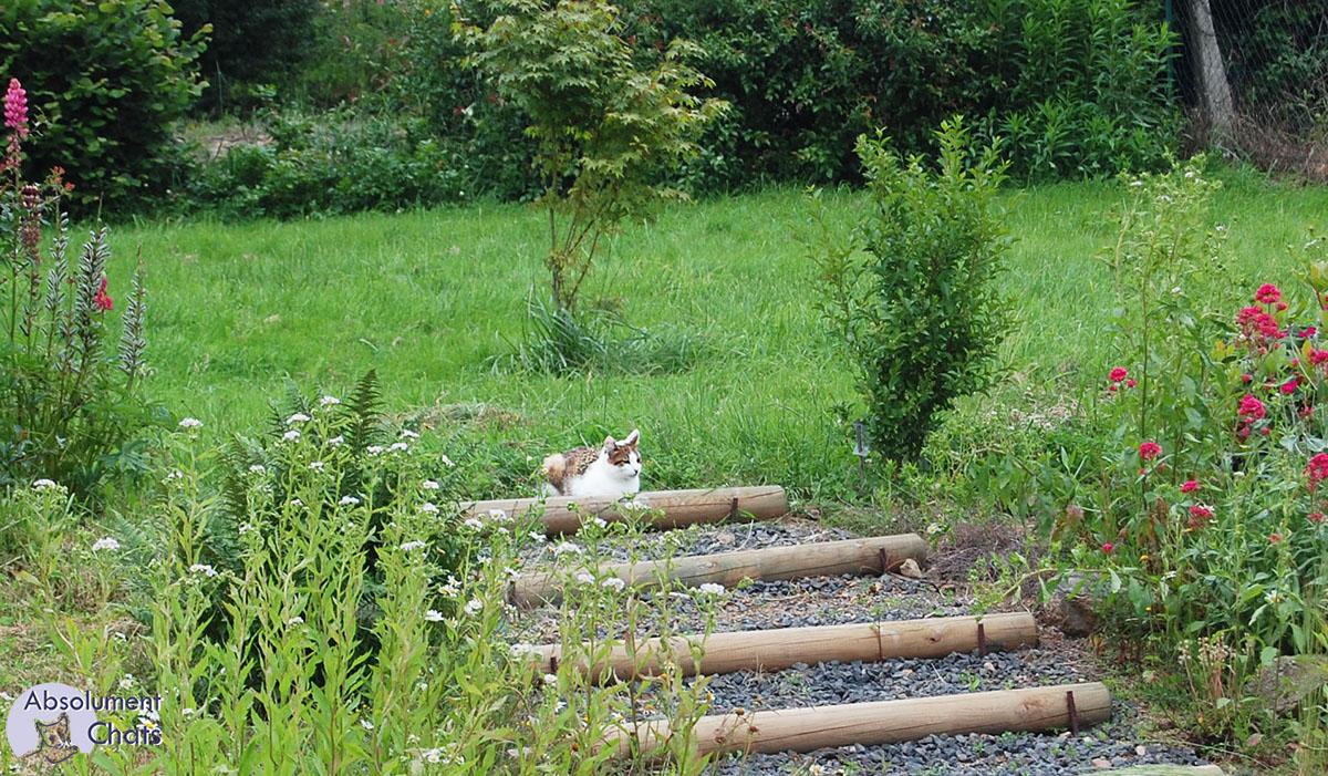 litiere chat dans le jardin