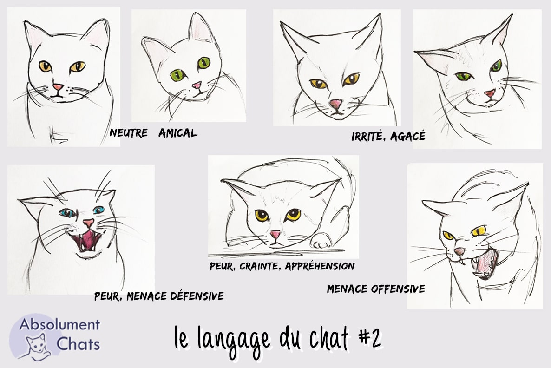 langage-du-chat-tete-absolumentchats.jpg