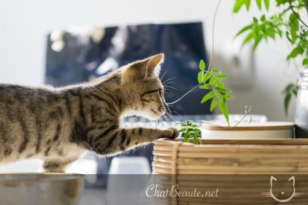 photo animaliere- pierre thomas - absolument chats -2
